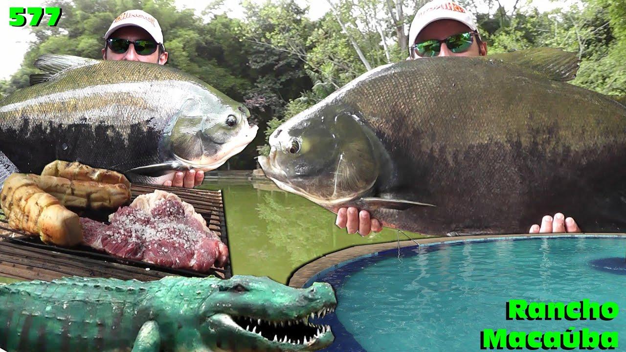Rancho Macaúba - Uma nova opção de lazer e peixes grandes em Goiás - Programa 577 Pesca e Pescaria