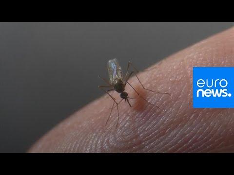 شاهد: ابتكار جديد يحمل الأمل بتخليص المنازل من أعتى أنواع البعوض في العالم…  - نشر قبل 3 ساعة