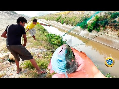 Net fishing in irrigation canal