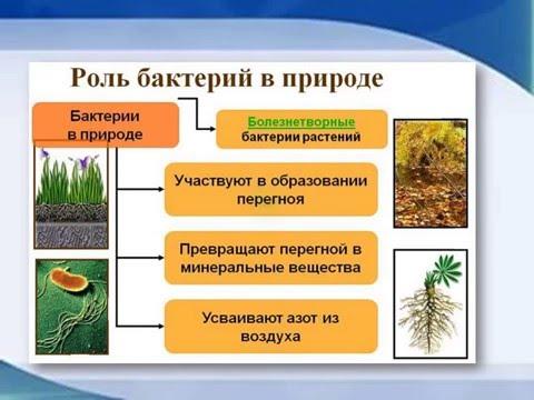 Видео-презентация Какую роль играют бактерии в природе