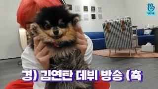 [V LIVE] BTS - 경) 김연탄 브이앱 데뷔 •̀ㅅ•́🐾 (축 (V&Jimin's V with his puppy)