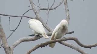 Parrot Trip 2016