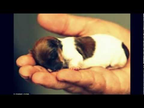 smallest cat in the world guinness 2016 contemporary cutest dog in the world guinness 2013 height - Smallest Cat In The World Guinness 2017