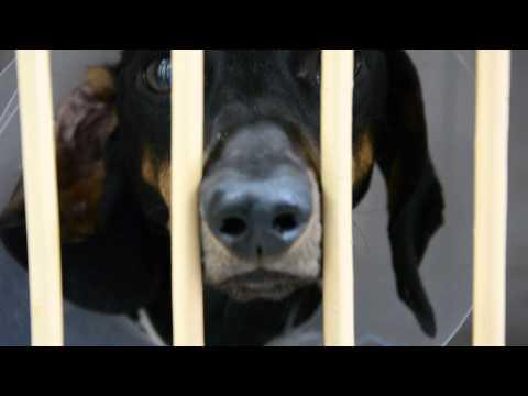 Как все происходит - ветеринарная клиника