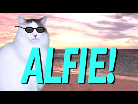 HAPPY BIRTHDAY ALFIE EPIC CAT Happy Birthday Song YouTube