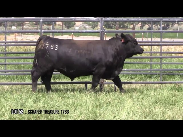 Mid Valley Bull Sale Lot 52
