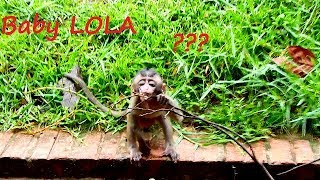 Because of hungry baby LOLA leave mom find food by self thumbnail