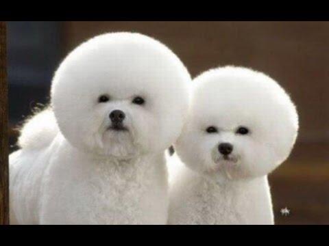 Super Cute Dog Having Haircut - YouTube