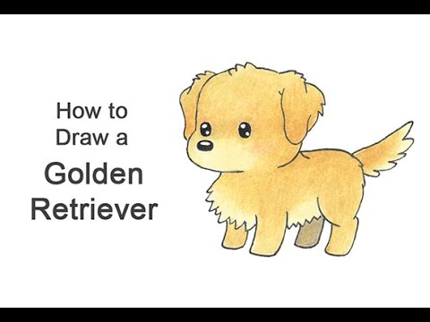 How To Draw A Golden Retriever Dog Cartoon Video Step By Step Pictures