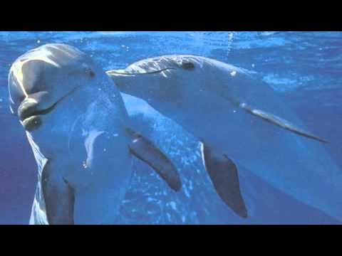 David Arkenstone - Dolphin Dance
