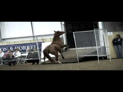 Monty Roberts Access all Areas on Horse & Country TV (UK)