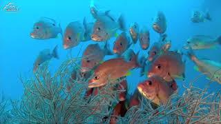 Органы чувств у рыб. Видеоурок.