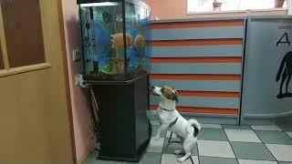 видео ветеринарная клиника донецк