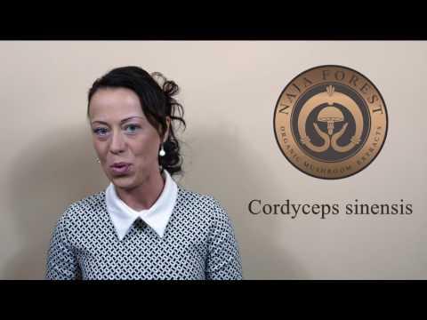NaJa Cordyceps sinensis