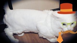 Побрил КИСКУ , Как 2 пальца об асфальт. тест машинки для стрижки животных.