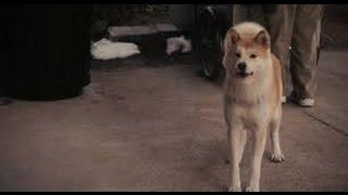Хатико-Самый Верный Друг!