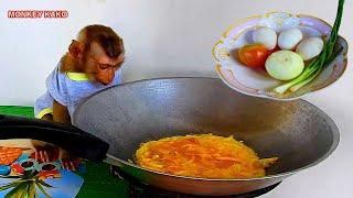 Monkey Kako Sit Waiting To Eat Fried Eggs | Monkey Eating Fried Eggs | Baby Monkey Eating Fried Eggs