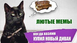 Лютые приколы. Кот и диван.Угарные мемы.