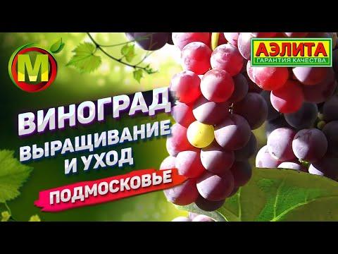 Виноград. Выращивание и Уход. Подмосковье 2019.