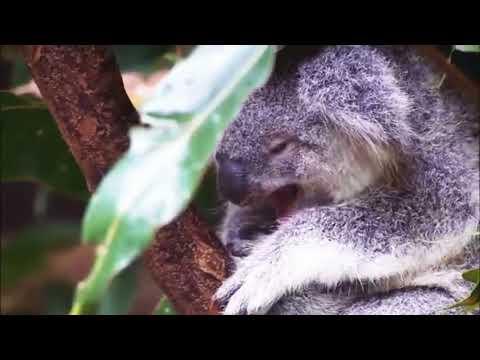 Amazing Nature birds and Animals video  whatsapp Status video