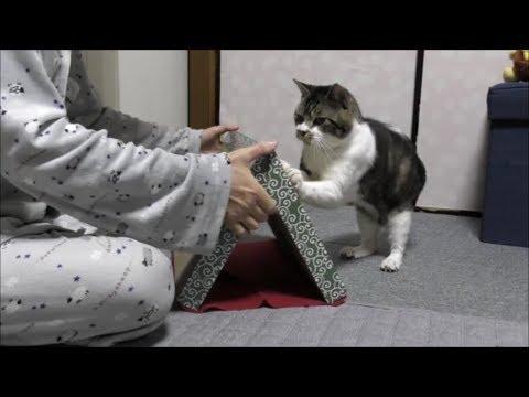 理由 猫 爪 とぎ