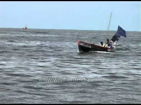 Boat sailing in the Arabian Sea