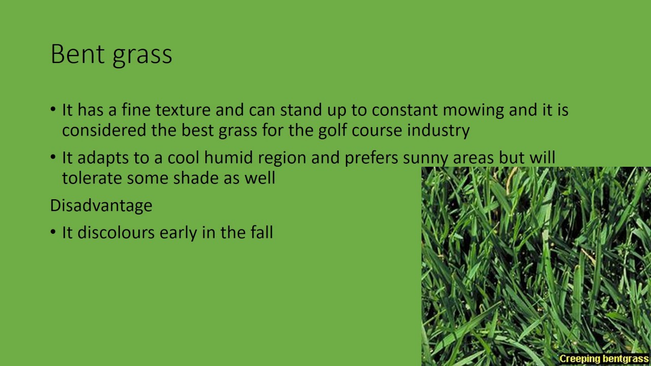 Different Types Of Grasses Use At A Golf Youtube