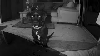 El lado oscuro de los perros