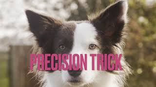 Puddles Grand Champion Trick Dog Submission