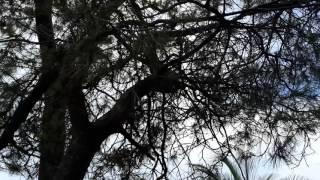 Погода кирове калужской обл(1)(, 2016-11-05T18:18:24.000Z)