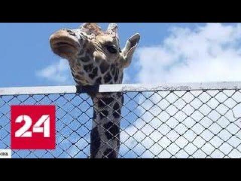 Опасный сезон в Московском зоопарке: чем грозит зверям плотное общение с посетителями