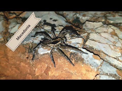 Macedonia SPECIAL!! Czy tu żyją tarantule?