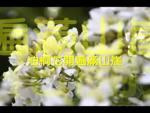 欒克勇-油桐作客MV