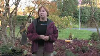 Gardening for Trees & Plants : Tips on Getting Rid of Mice