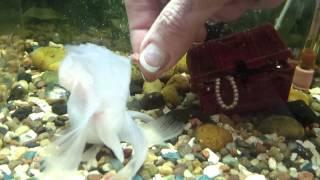Bonnet the cutest fish ever!