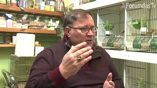 Muhabbet Kuşu Kabarıyor İshal Durgun ve Halsizlik Nedenleri