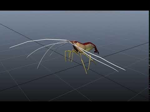 Animation Rig: Cleaner Shrimp
