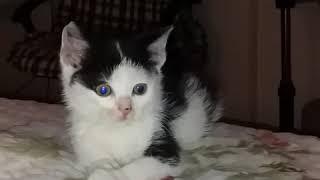 Спасли котенка, ищем дом малышу