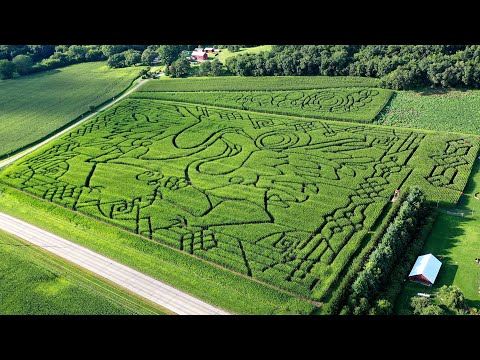 From mind to maze: The making of a corn maze
