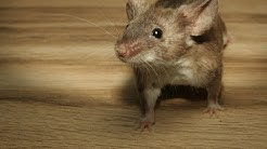 Fascinating facts about MICE you need to know
