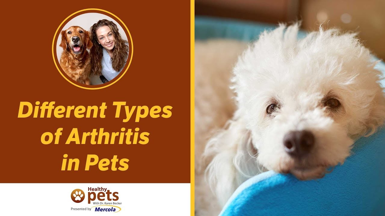 the different types of pets