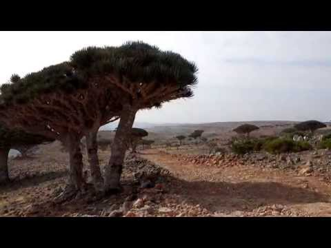 Paradise has an address SOCOTRA