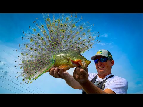 The Most Beautiful Fresh Water Fish In The World! Epic Underwater View!