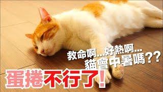 蛋捲不行了?!貓會中暑嗎?【好味貓知識】EP4 thumbnail