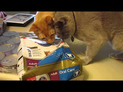 Burmese Cats breaking into food bag