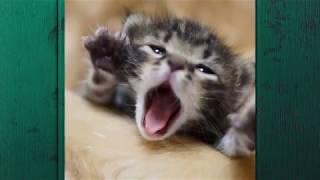 Почему кошка бьет котят?