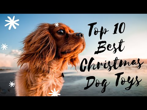 top-10-best-christmas-dog-toys