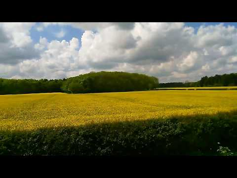 Acres of Rapseed Oil,  Driffield Rd, Driffield, East Yorkshire May 2017