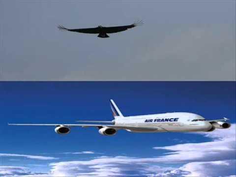 musica de reinaldo armas el zamuro y el avion
