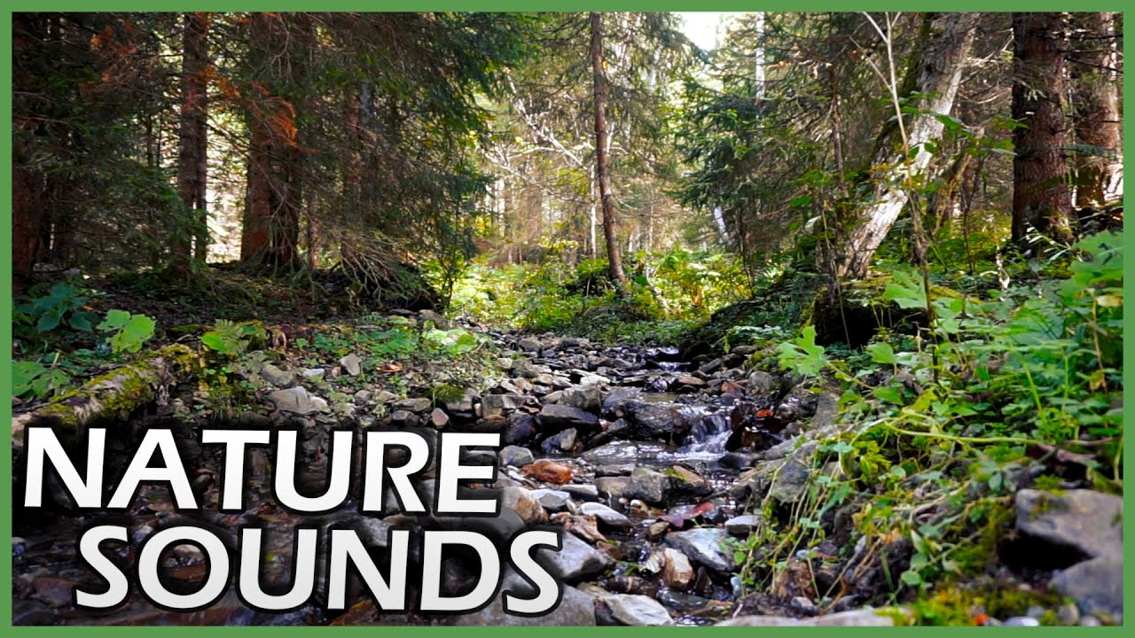 Nature Sounds 🌳 Relaxing Stream 💧 Little Waterfalls 🌲 Time for Relaxation (1 Hour)
